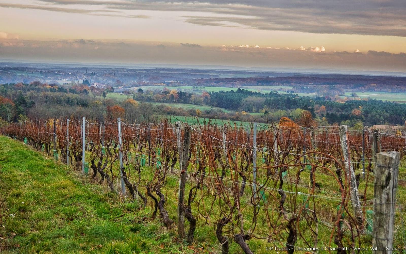 Vignoble de Champlitte Val de Saône
