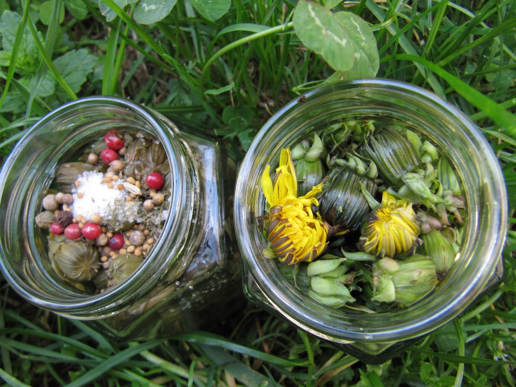 Pissenlit épicerie verdure naturel bio